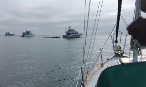 Ventura Fleet at Anchor in White's at Catalina Island